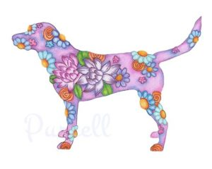 Labrador violeta