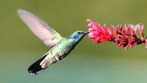 28 hermosas flores que atraen a los colibríes