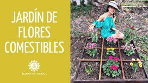 Cómo cultivar flores de hibisco comestibles en su jardín