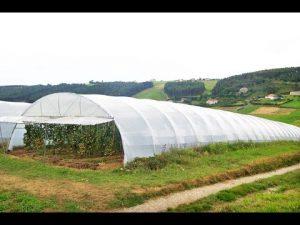 Plasticos Para Invernaderos Grandes