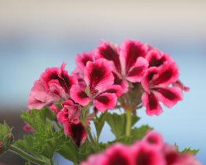 Plantas Flor De Primavera