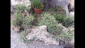 Cómo plantar entre las rocas