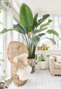 Decorar interiores con plantas tropicales