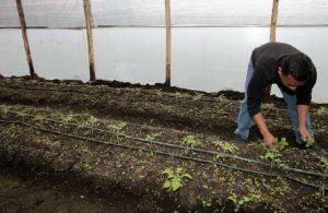 ¿Cómo preparar el suelo para la siembra?