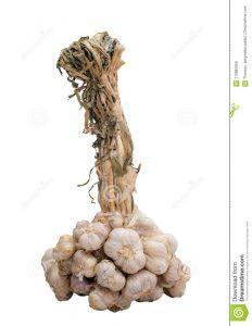 La raíz del racimo