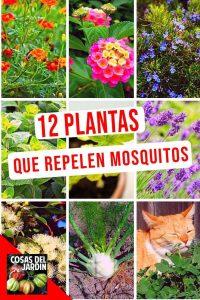 Plantas repelentes de mosquitos