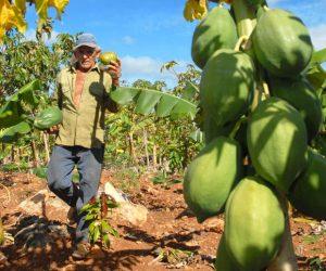 Preguntas frecuentes sobre la permacultura