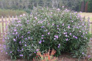 Planta de hoja perenne